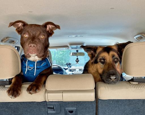 Amanda's Dogs - Jack & Bailey